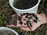 Finds from the Derragh excavation including hazelnuts